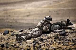 Marine Combat USMC working dog Afghanistan 2010