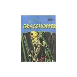 of a Grasshopper (Life Cycles) (9781844433100): Clare Hibbert: Books
