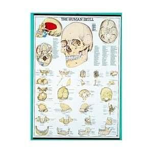 Human Anatomy Charts, Set/16 with Tripod:  Industrial