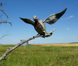EDGE BY EXPEDITE DOVE N AIR MOTORIZED FLAPPING MOTION DOVE DECOY NEW