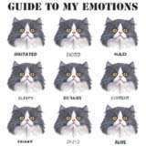 Guide To My Emotions Cat Faces Cat Shirt Cat T Shirts Tee Hoodie Kitty