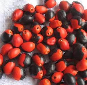 50 HUAYRURO LARGE BIG BEADS  Seeds Peru Drilled