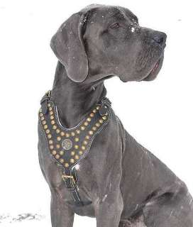 Leather Studded Harness Cane Corso Mastiff Rottweiler