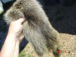 Raccoon pelt fur wild skin for hunting cabin/fireplace
