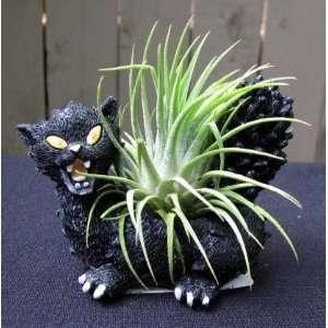 Cat Halloween Planter + Live Air Plant   Easy Patio, Lawn & Garden