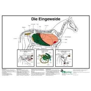 Hertsch, Deutsche Reiterliche Vereinigung e. V., Uwe Spenlen Bücher